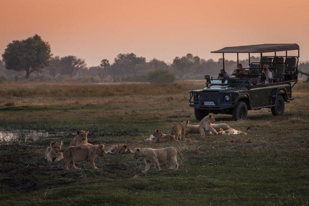 Rosa himmel med grønne trær og busker en stor løveflokk på savannen slapper av ved siden av en vanndam med grønn åpen safaribil og tre mennesker som observerer og tar bilder av dyrene