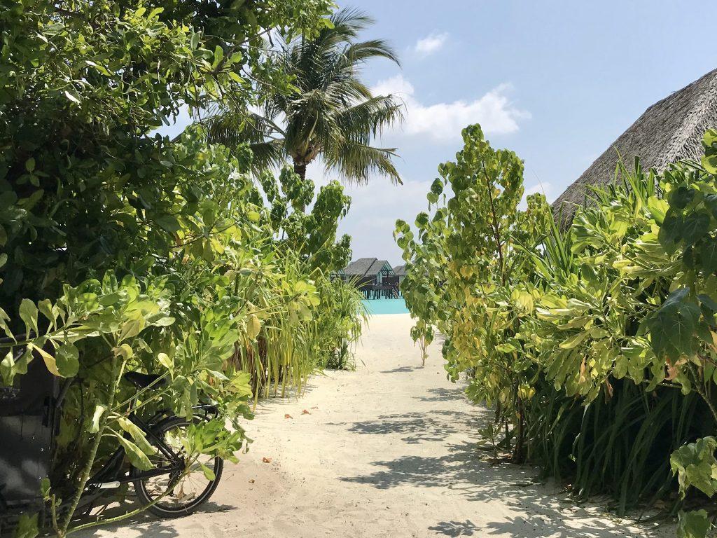 Grønne busker og hvitt korallsand